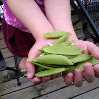 Insalata di piselli Springtime Sugar Snap (senza glutine)